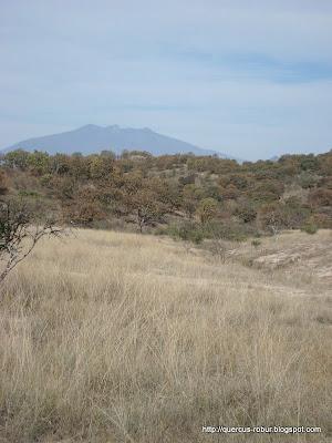 Cerro de Tequila vista antes de iniciar ascenso al Cerro los Bailadores