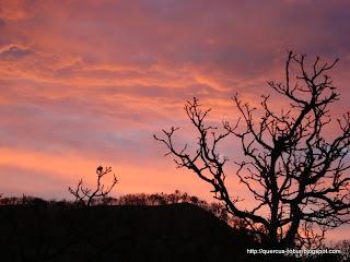 Anochecer en bosque de encinos, sequía