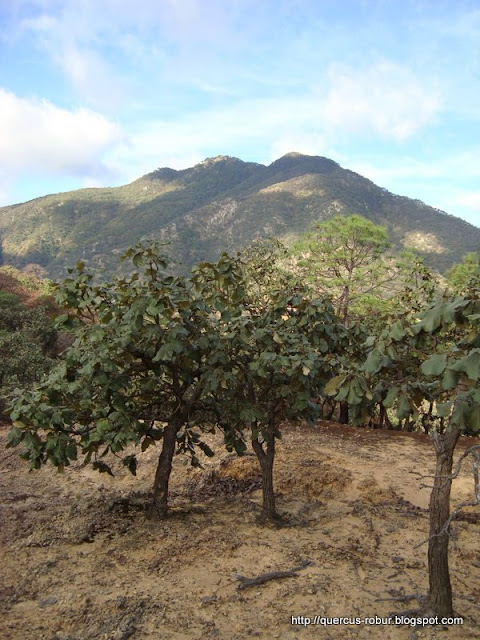 Segundo Picacho (2250 msnm) visto desde los 1800 msnm