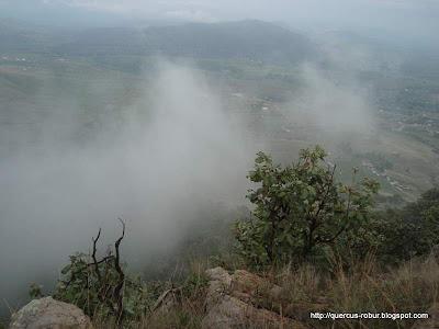 Neblina en el Cerro San Francisco