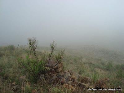 Neblina en las faldas del Cerro San Francisco