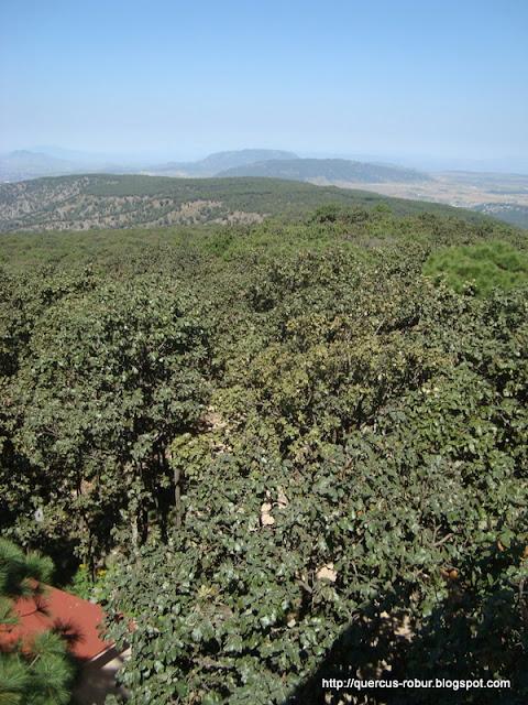 Cerro Alto visto desde Torre 2 (BLP)