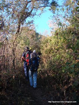 Vereda por el bosque subcaducifolio en Cerro Viejo