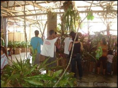 ambientes del xiv festival de la orquidea 2009 (moyobamba, peru)