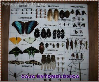 caja entomologica