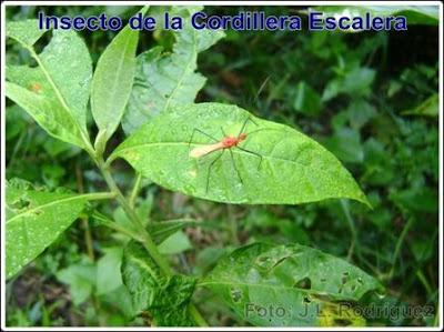 insecto de la cordillera escalera