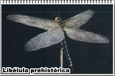 libelula gigante