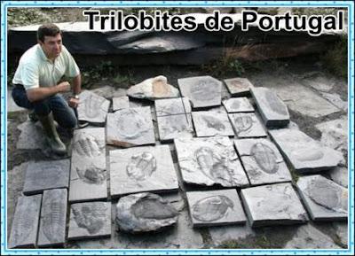 trilobites gigantes