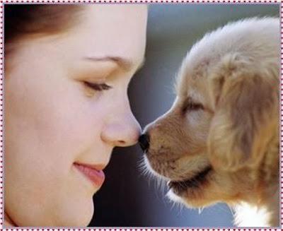 mascotas amorosas