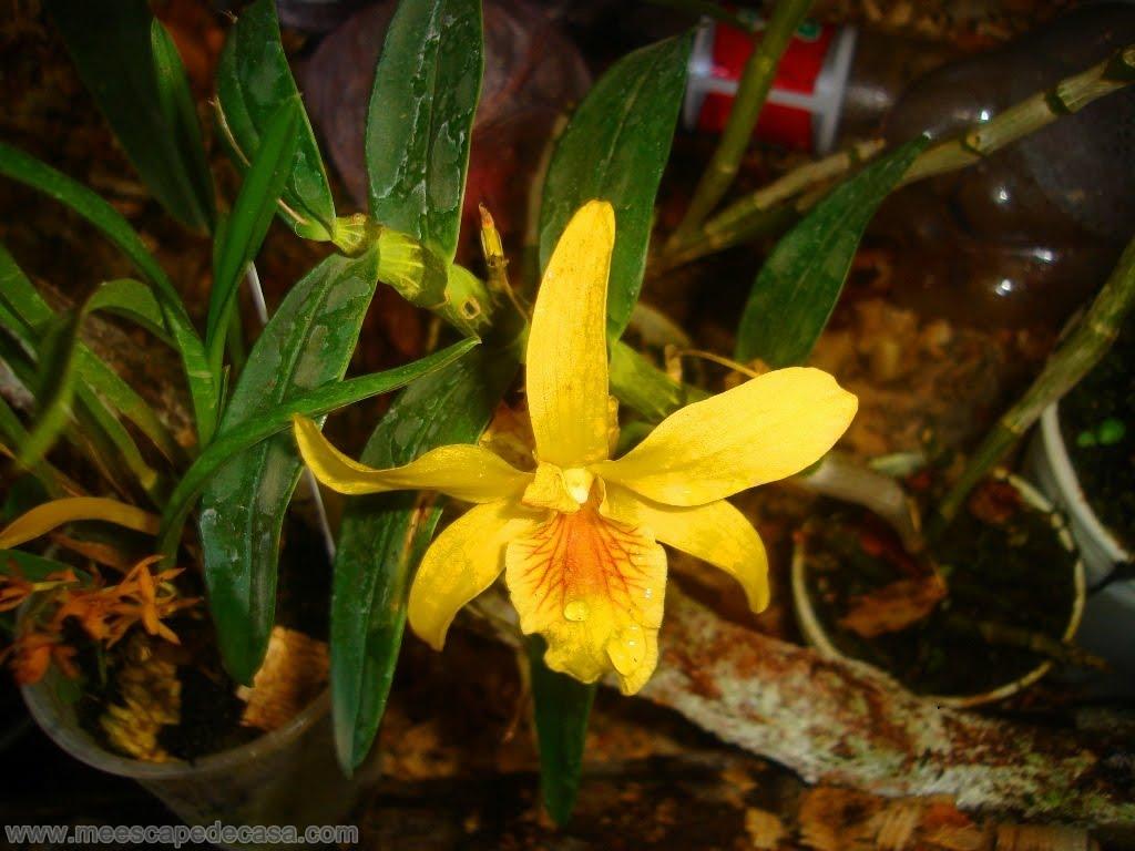 Me escap de casa descarga fotos de orqu deas y otras for Plantas ornamentales croto