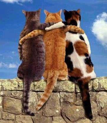 Feliz cumpleaños Oscar Cats