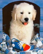 176x220 puppy mobile wallpaper