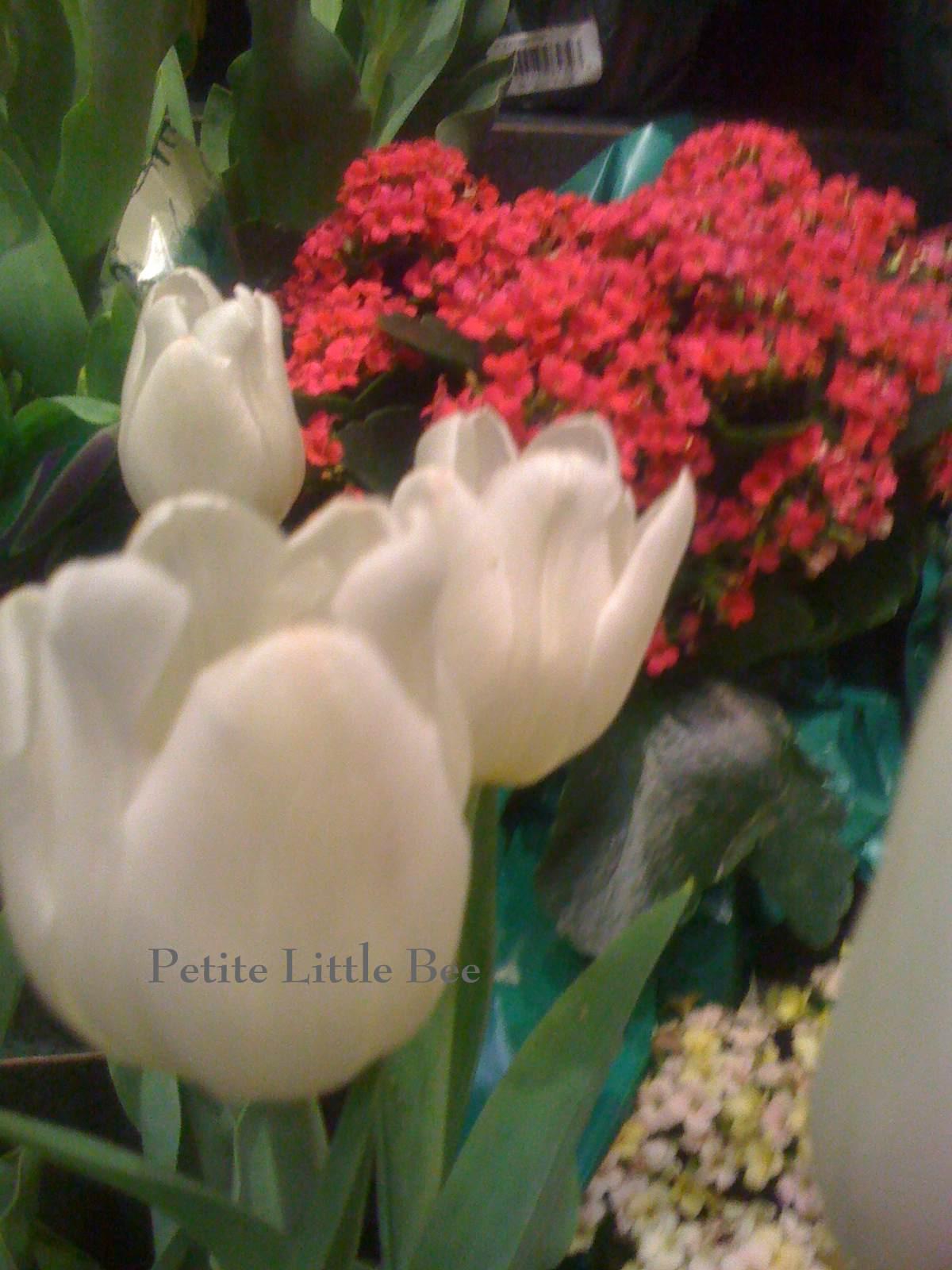 [flowers+3]