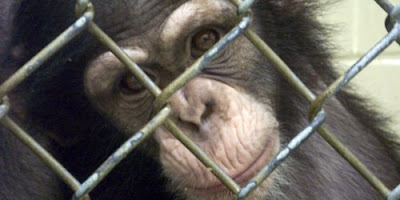 an overview of the animal cruelty and the research laboratories in the united states Stop huntingdon animal cruelty extremist, daniel andreas san diego is wanted   san diego was indicted in the united states district court, northern district of.