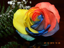Rainbow rose from my hubby!!