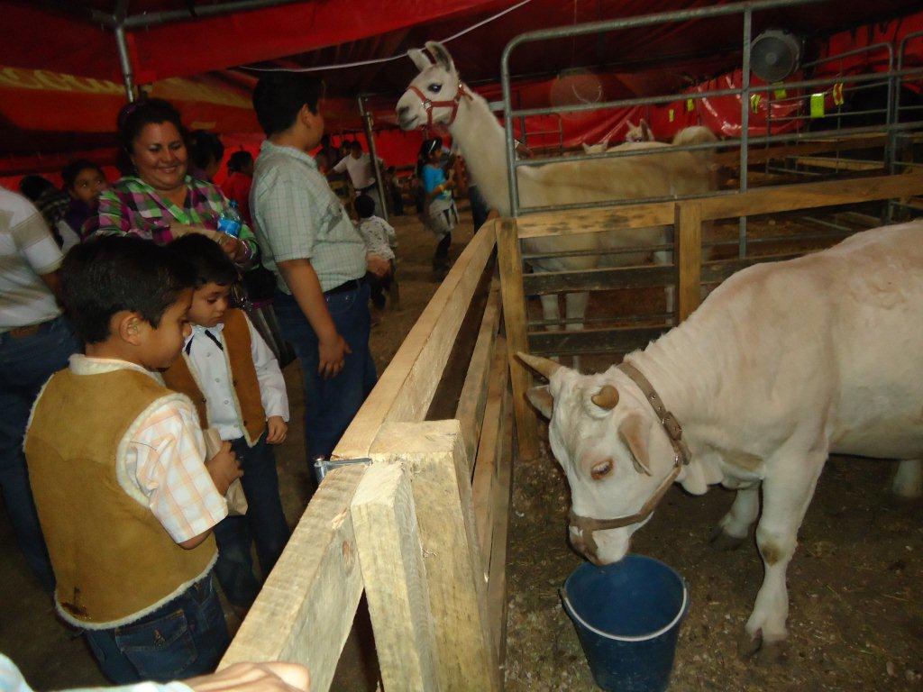 Granja interactiva de la expo feria muy visitada por la gente for Animales fuera de serie