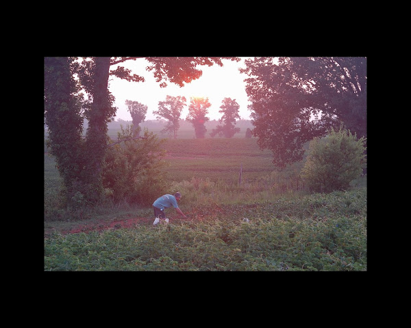 Sunrise: Picking Peas off County Rd. 2