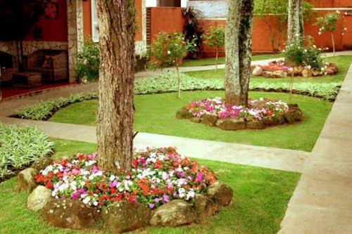 flores jardim de sol:Flores & Jardins: Clorofito