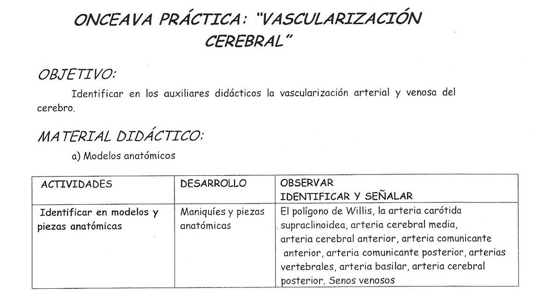 MORFOLOGIA DEL SISTEMA NERVIOSO: PRACTICA 11: VASCULARIZACIÓN CEREBRAL