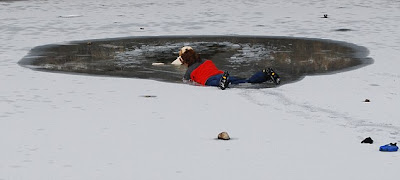 Woman Nearly Died Trying to Save Her Dog Seen On  www.coolpicturegallery.us