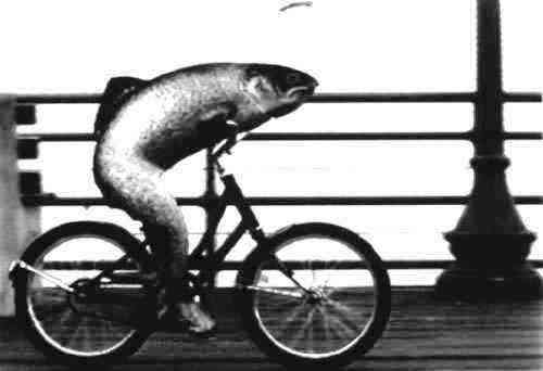 http://2.bp.blogspot.com/_5nDMnrtXhTw/TQC35cz2oUI/AAAAAAAACdM/cJ2SnCJM_-g/s1600/fish+on+bike.jpg