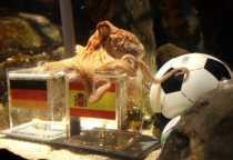 Pulpo Paul gana España a Holanda