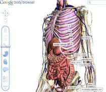 Google Body Browser permite navegar por el cuerpo humano