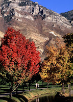 Scenic tree and mountain landscape at BYU.