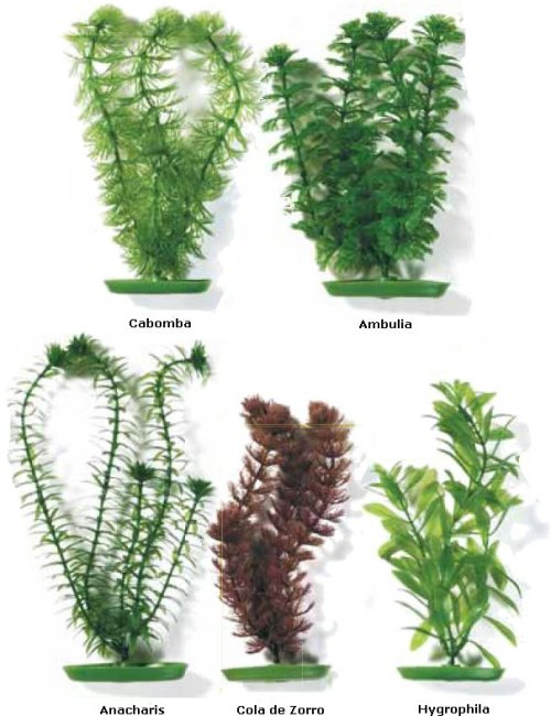 C lula y transferencia de energ a 8 a epe biolog a qu Nombres de plantas comunes