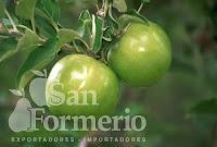 SAN FORMERIO SRL