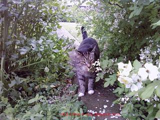 Cat prowling the garden