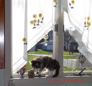 Another picture of cute calico tiger kitten in the window