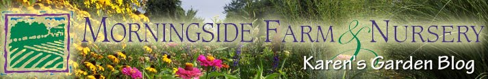 Morningside Farm & Nursery - Karen's Garden Blog