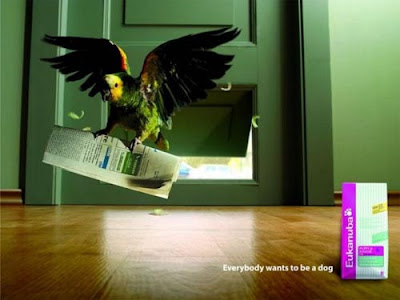 eukanuba1 Astonishing Animal Advertisements Creating Awareness