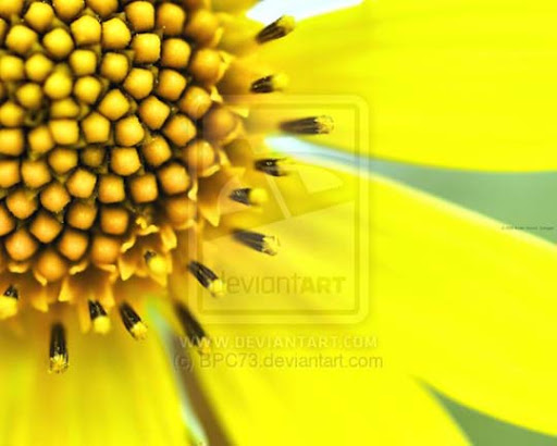 Yellow Flower by BPC73 Colors Around Us: Yellow Photography Inspiration