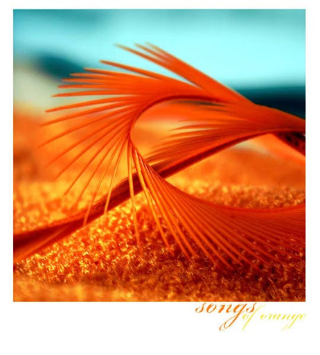 songs of orange by lylianthe All Things Orange | Color Photography Inspiration #2