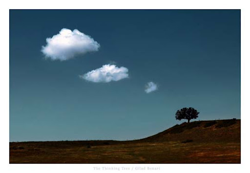 The Thinking Tree by gilad Conceptual Photography: Pictures Speak a Thousand Words