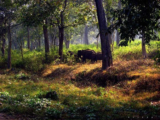 Elephants,+Nagarhole+Forest,+Karnataka The Incredible India: 90 Spectacular Photos