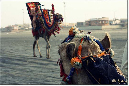 Camel+Watching+His+Buddy+At+Work The Beauty of Pakistan: 70 Amazing Photographs