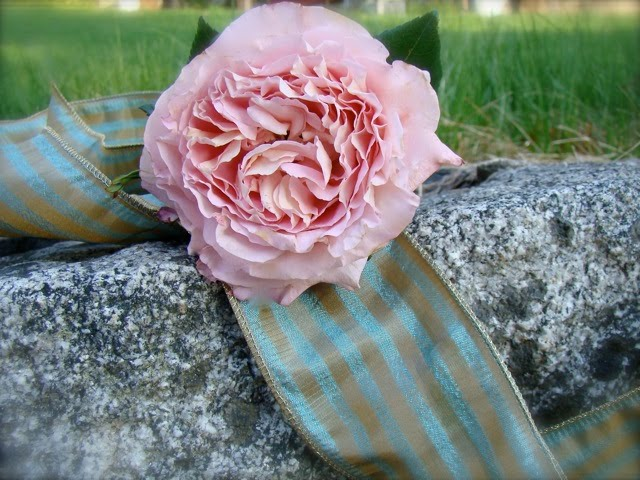 The light pink rose in the photo above has a wonderful old fashioned rose