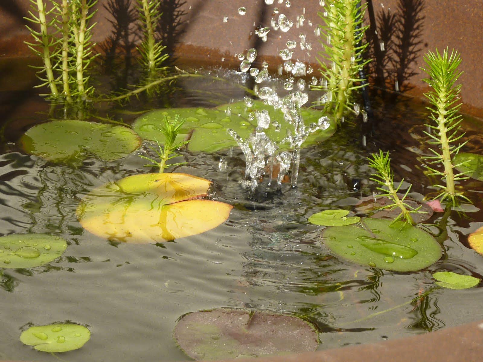 diy : fabriquer un mini bassin aquatique! - initiales gg