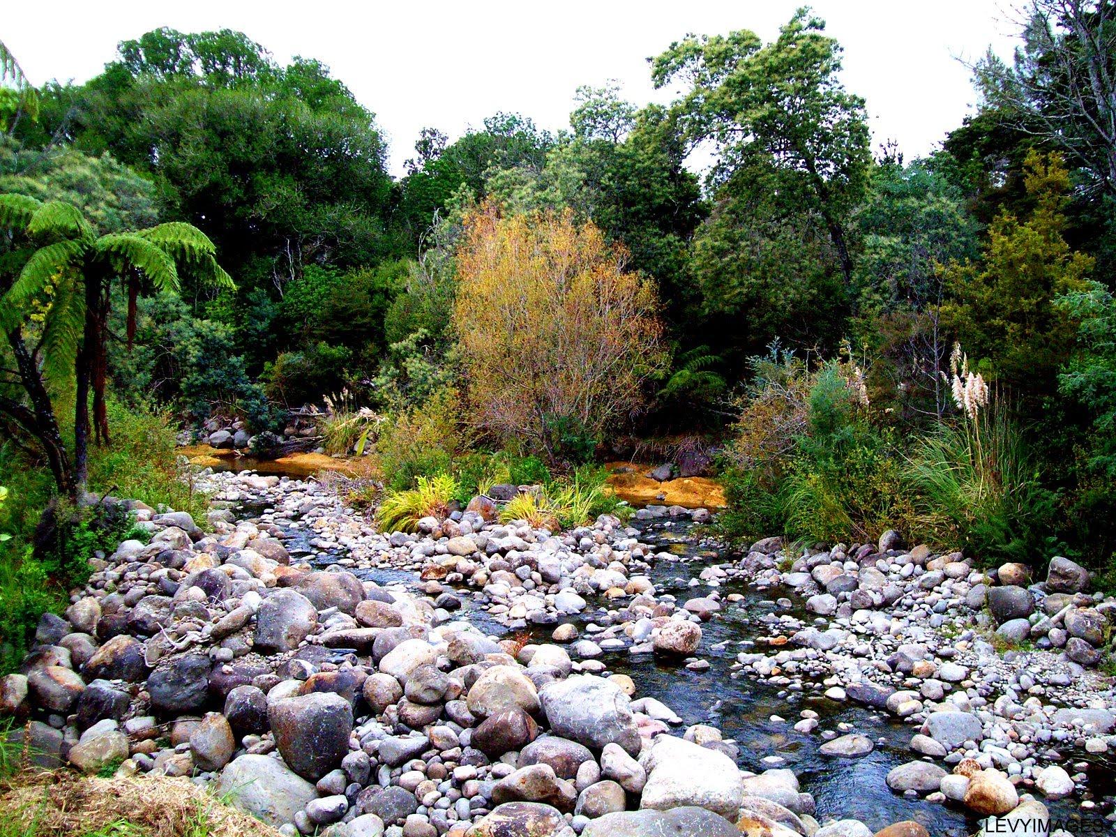 katikati naturist park