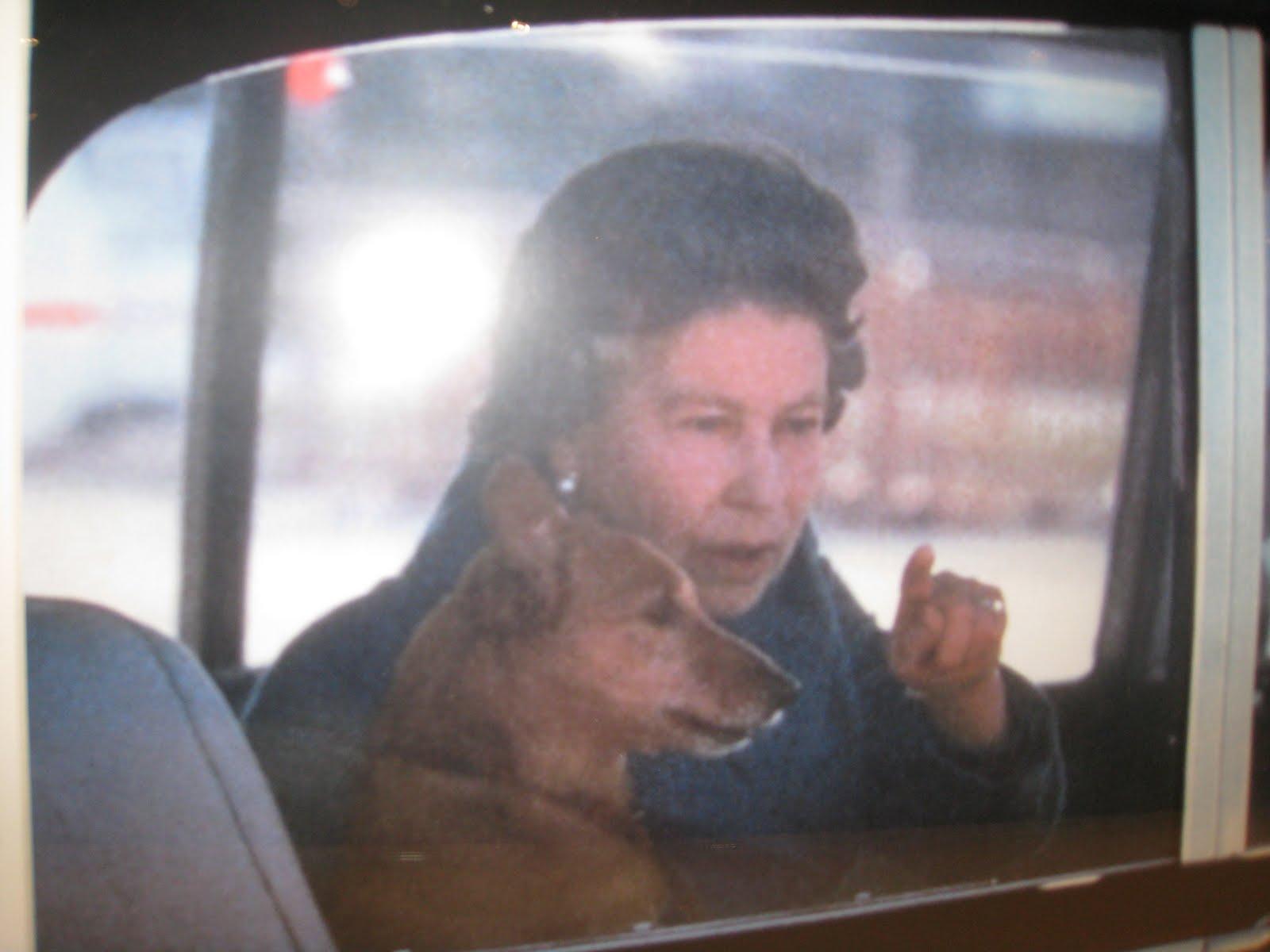 International luxury consulting stephane bern dedicace son livre une vie de chiens les - Compagnon de stephane bern ...
