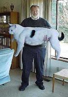 Fat cats