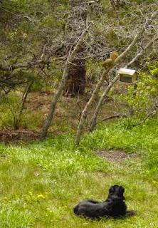 Shelby on squirrel patrol.
