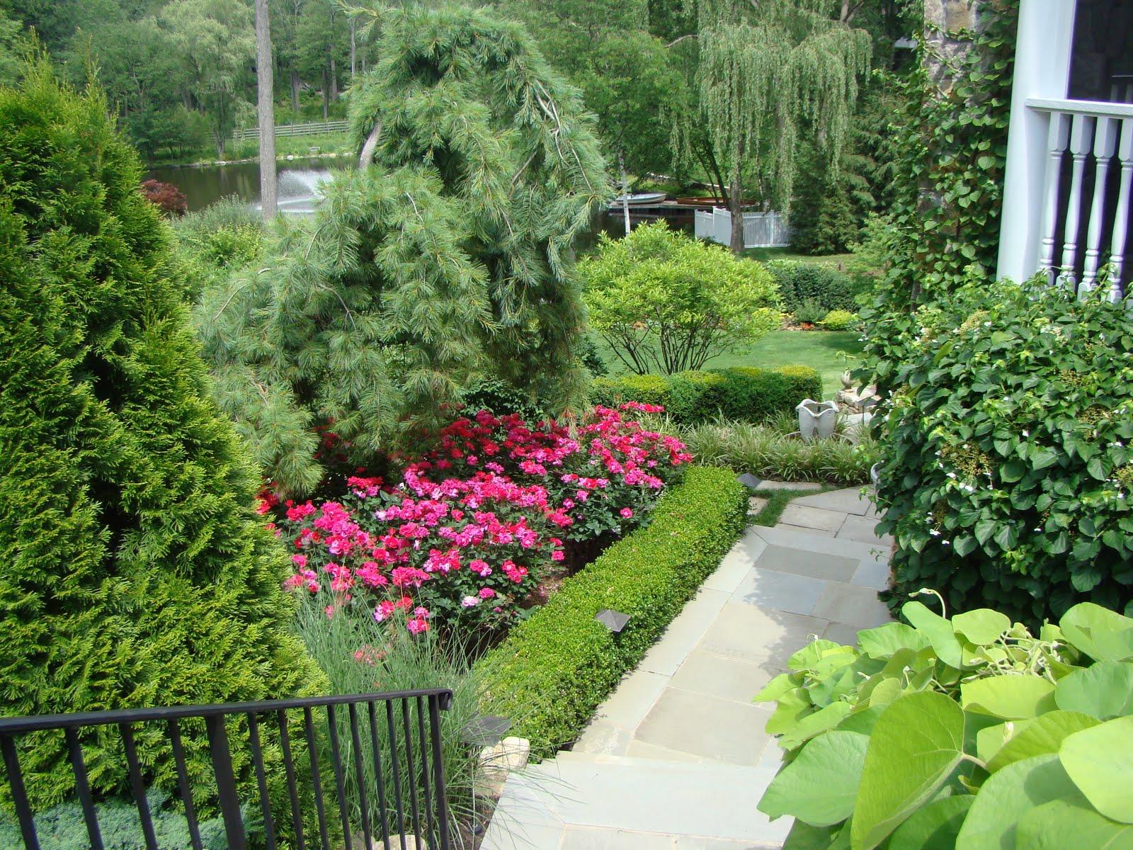 Ландшафтный дизайн участка с розами фото