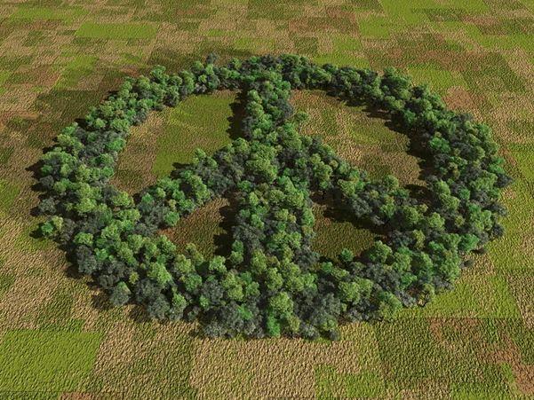 http://2.bp.blogspot.com/_5xJ_jlTUVG4/THexxrSu03I/AAAAAAAACI4/EmijyGHQ8m0/s1600/peace_trees%2Bfrom%2B%2Bjust%2Bfocus.org.jpg