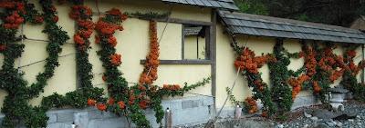 zen garden back wall