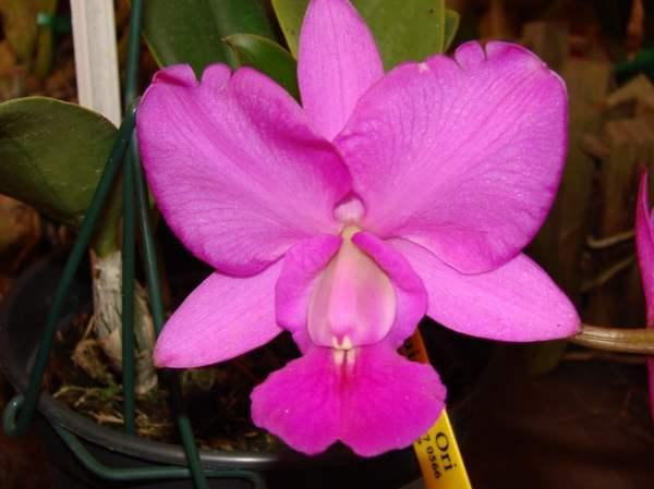 http://2.bp.blogspot.com/_5xjnj6B_l-4/TJ93HYNxJaI/AAAAAAAAAGM/G11GDbGdPA8/s1600/orquideas.jpg
