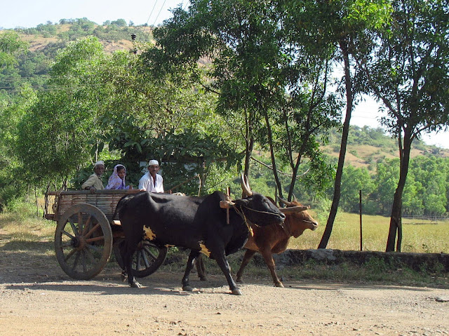 family on bullock cart in India